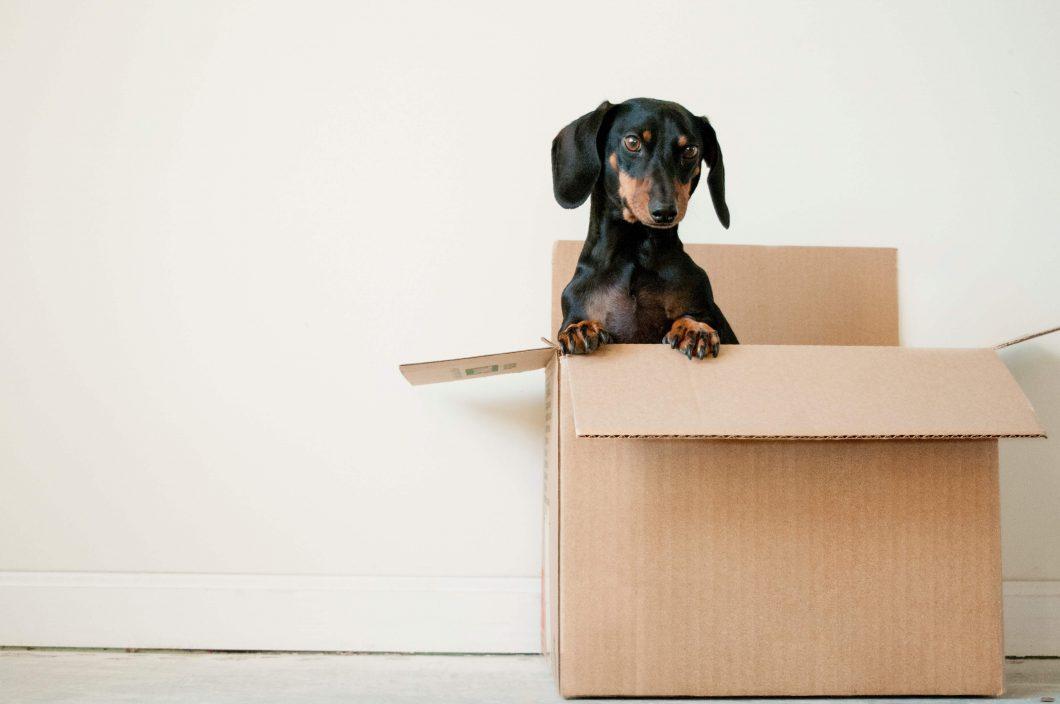 Verhuizen zonder stress
